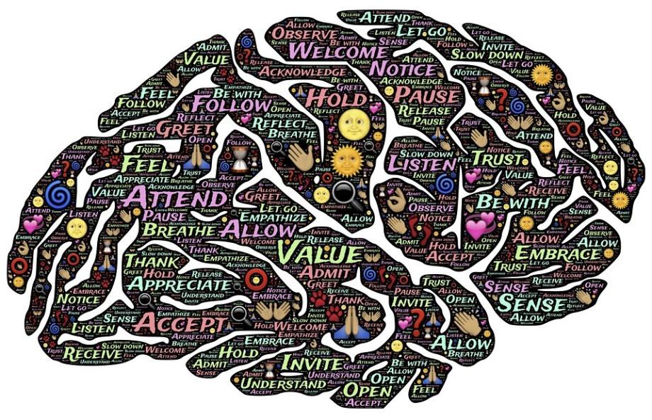 brain-744207_960_720